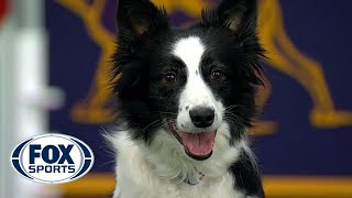 Watch 5 of the best WKC Dog Show moments to celebrate National Puppy Day   FOX SPORTS