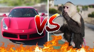Picking Up Girls With A Ferrari VS With A Monkey!!