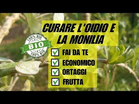 OIDIO E GOMMOSI, RIMEDIO BIOLOGICO FAI DA TE ECONOMICO ED EFFICACE