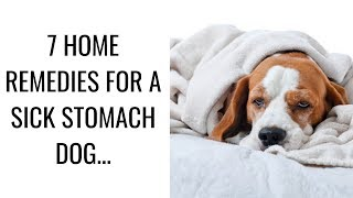 7 Home Remedies For a Sick Stomach Dog