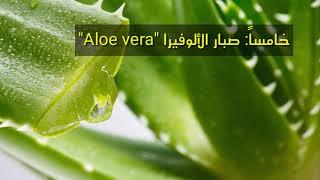 سبع نباتات لتحسين الطاقة ...