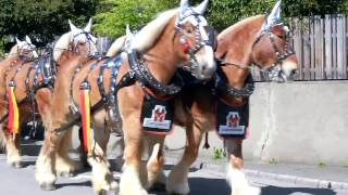 スイス発 ビール馬車 2017ベルン見本市BEA③【スイス情報.com】