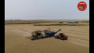 Wheat Harvest 2018 near Bottineau North Dakota
