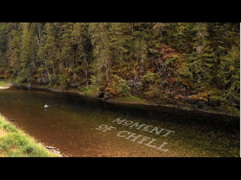 Beautiful Drone shot dry fly fishing in river | Moment of Chill