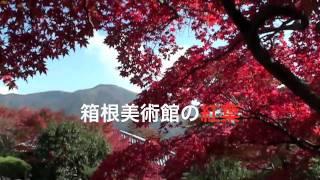 神奈川県・箱根美術館の紅葉HakoneinAutumn箱根観光紅葉便り日本の紅葉