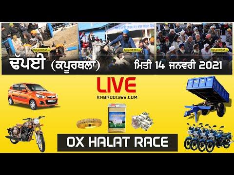 Dhapai (Kapurthala) Ox Halat Race 14 Jan 2021