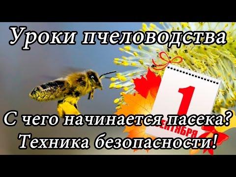 Курсы пчеловода: Выбор пасеки (Система ульев, место, кочевка), Техника безопасности. | Урок 1.