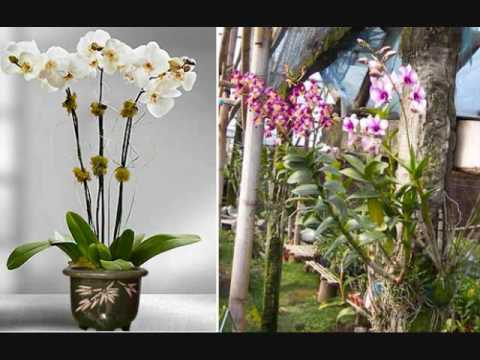 Video Rahasia Sukses Cara Budidaya Bunga Anggrek dengan Mudah dan Sederhana