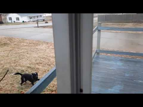 Hilarious Dog Slides Across an Ice Covered Deck