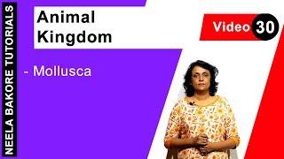 Animal Kingdom - Mollusca