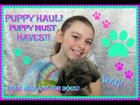 🐾PUPPY HAUL!🐾FAVORITE PUPPY SUPPLIES!🐶FIRST DAY TV