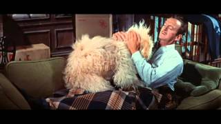 Please Don't Eat the Daisies (1960) Video