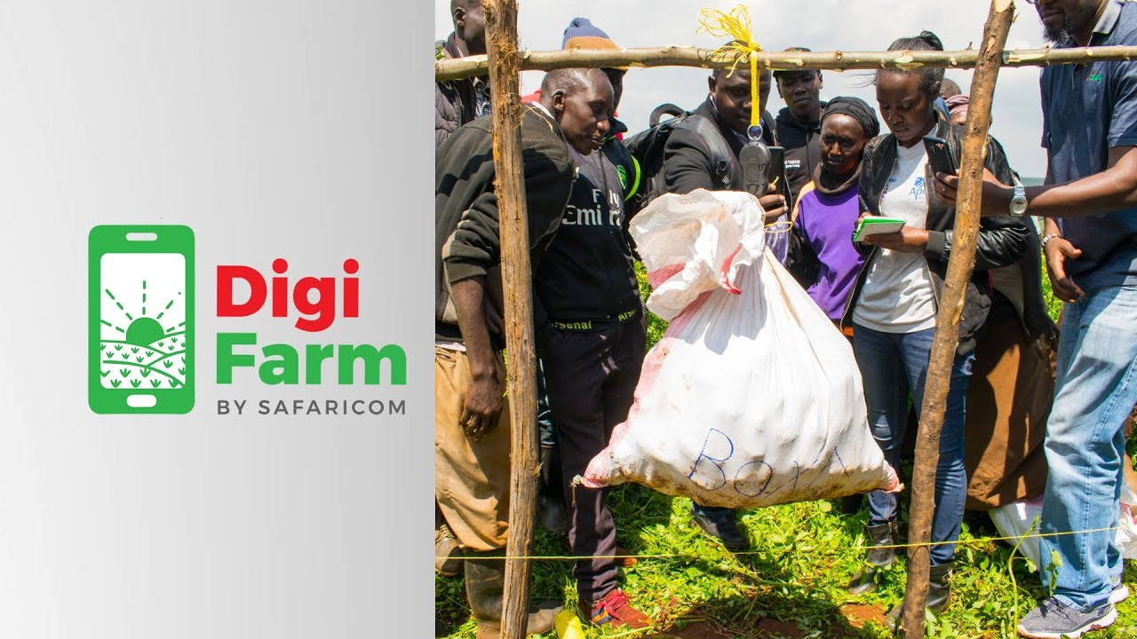 Digifarm Potato Value Chain Programme in Elgeyo Marakwet County August 2019