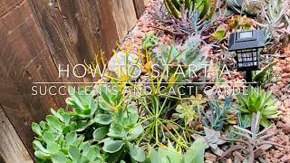 How To Start A Succulents And Cacti Garden From Scratch