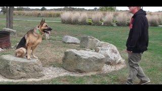 Dog Training: 7 Year Old German Shepherd, Astig! Before/After 2 Week Board and Train!