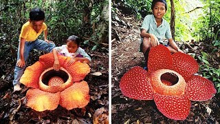 10 RARE AND AMAZING FLOWERS You Wont Believe Exist