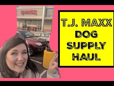 TJ Maxx Dog Haul | Dog Supplies Haul