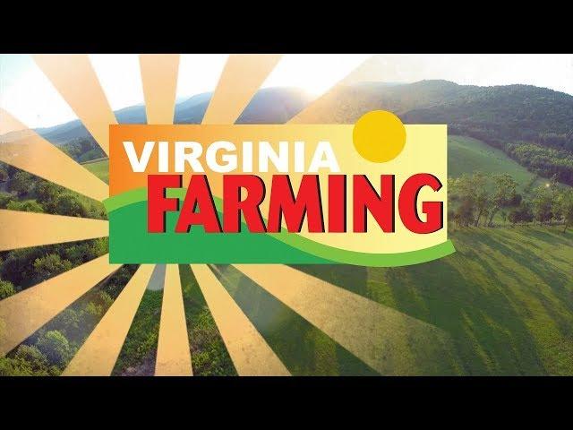 Virginia Farming: VSDB Urban Farm - Evergreen