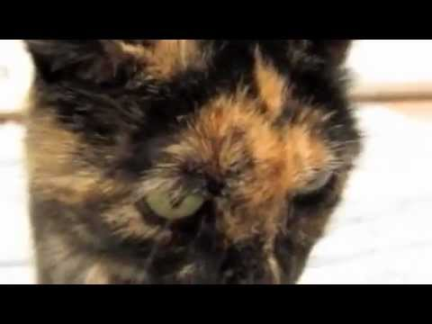 Tortoise-shell Cat Blues