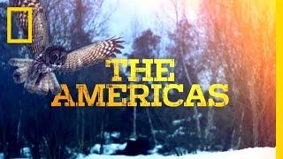 Untamed Series Trailer | Untamed Americas thumbnail