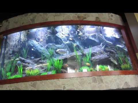 Fish Gallery - Massive Acrylic Aquarium (5000 Gallons)