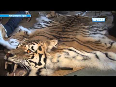 В Хабаровском крае задержаны браконьеры - краснокнижники