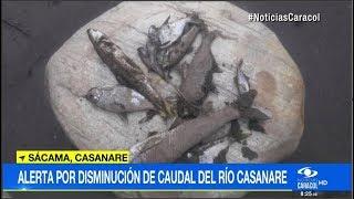 Mortandad de peces por disminución de caudal del río Casanare