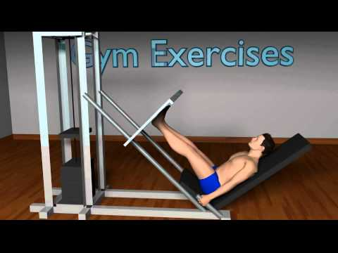 Video of Gym Exercises