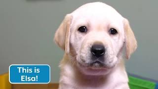Sponsor a Puppy - Elsa