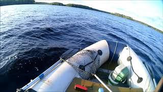 Рыбалка на гладышевском озере ленинградская область