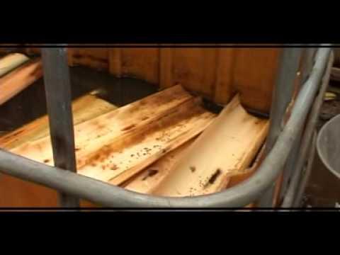 Video TEKNIK BUDIDAYA BELUT AIR BERSIH & PEMBIBITAN DG MEDIA LUMPUR