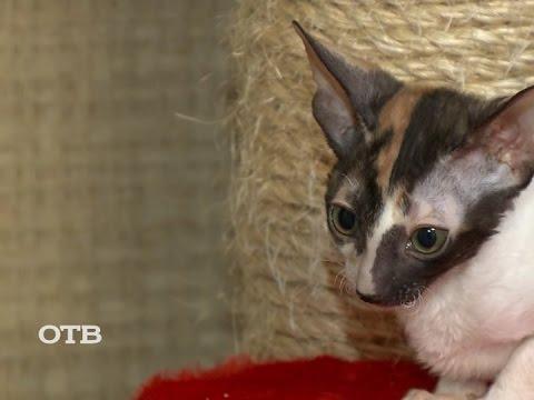 Чем полезно кошачье мурлыканье?
