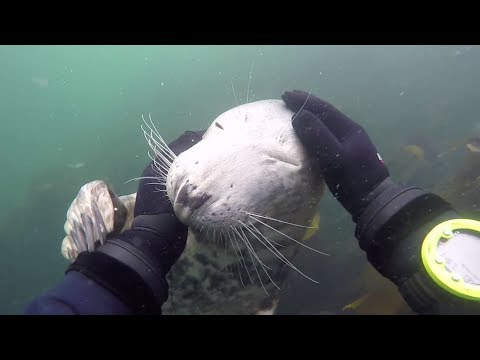 Seals are just underwater dogs