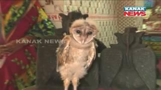 People Worship Owl Ressembling Garuda In Bishnu Temple In Dhenkanal