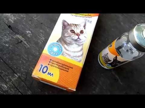Чем лечить конъюнктивит у кошек и котов. Капли Барьер.