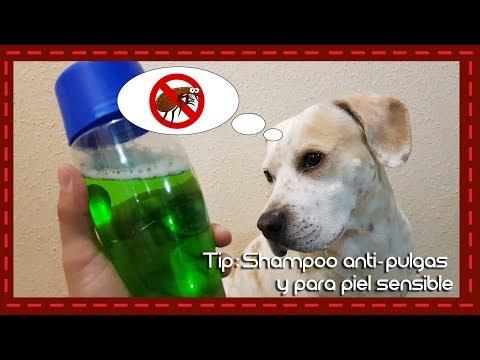 Tip: Shampoo casero para perros antipuglas y piel sensible