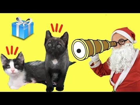 Papá Noel espía a mis gatitos bebés Luna y Estrella antes de Navidad / Funny cats