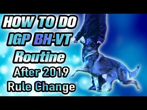 THE NEW schutzhund IPO IGP BH BH-VT Exam Routine 2019 After Rule Change