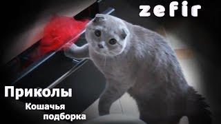 Смешные кошки   приколы с кошками и котами 2018 (кошачья подборка 2018)   кошки лучшее   zefir