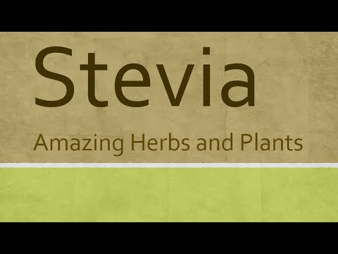 Video Amazing Benefits of Stevia Herb - Health Benefits of Stevia - Amazing Herbs and Plants
