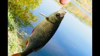 Рыбалка на голубом озере в саратове
