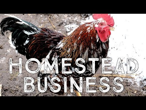 Starting a Homestead Business: Legal Structure and Tax Filing