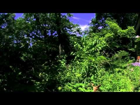 森へ帰るヤママユ