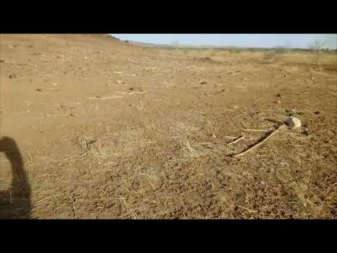 Challenging Desertification in Niger