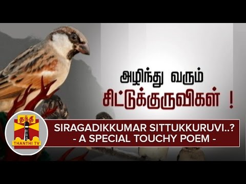 Siragadikkuma-Sittukkuruvi-A-Special-Touchy-Poem-about-Sparrow--Thanthi-TV