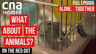 Socially-Distanced Animals | On The Red Dot | Full Episode