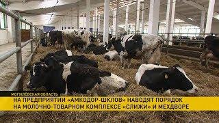 Как на ферме «Слижи» наводят порядок после приезда Лукашенко?