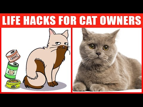 24 Awesome Cat Life Hacks That Every Pet Owner Should Know