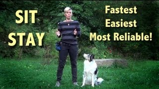 The easiest, most reliable SIT STAY  -  sit stay training! sit stay fun!