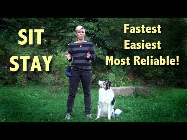 The easiest, fastest and most reliable SIT STAY- clicker dog training